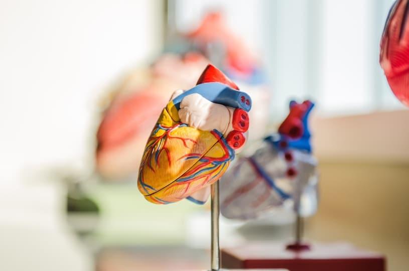 Coenzima Q10 benefici per il cuore